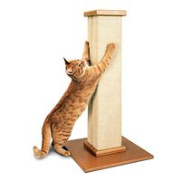The Ultimate Scratching Post